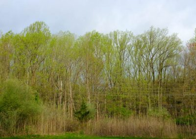 LHT Spring Photo by Charlie Zielinski (6 of 10)