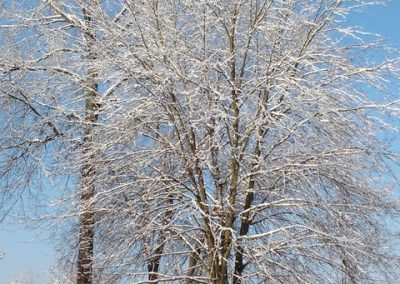 LHT in Winter photo by Anne Bloomenthal