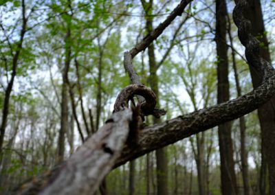 LHT Spring Photo by Charlie Zielinski (4 of 10)