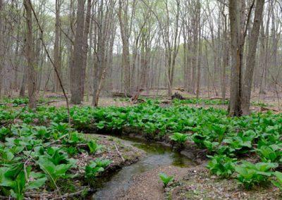 LHT Creek photo by Charlie Zielinski