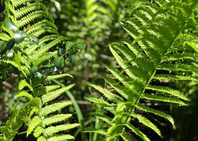 LHT Fern photo by Lynn Dorsey