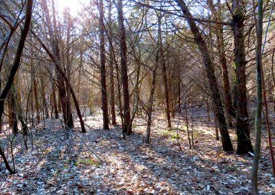 LHT Mercer Meadows Pole Farm Feb 16 2020