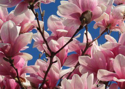 LHT Spring Flowers