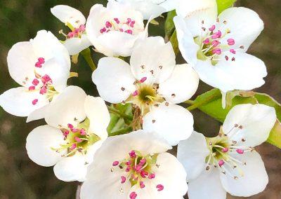 LHT Spring Flowers by John Marshall Apr 2020