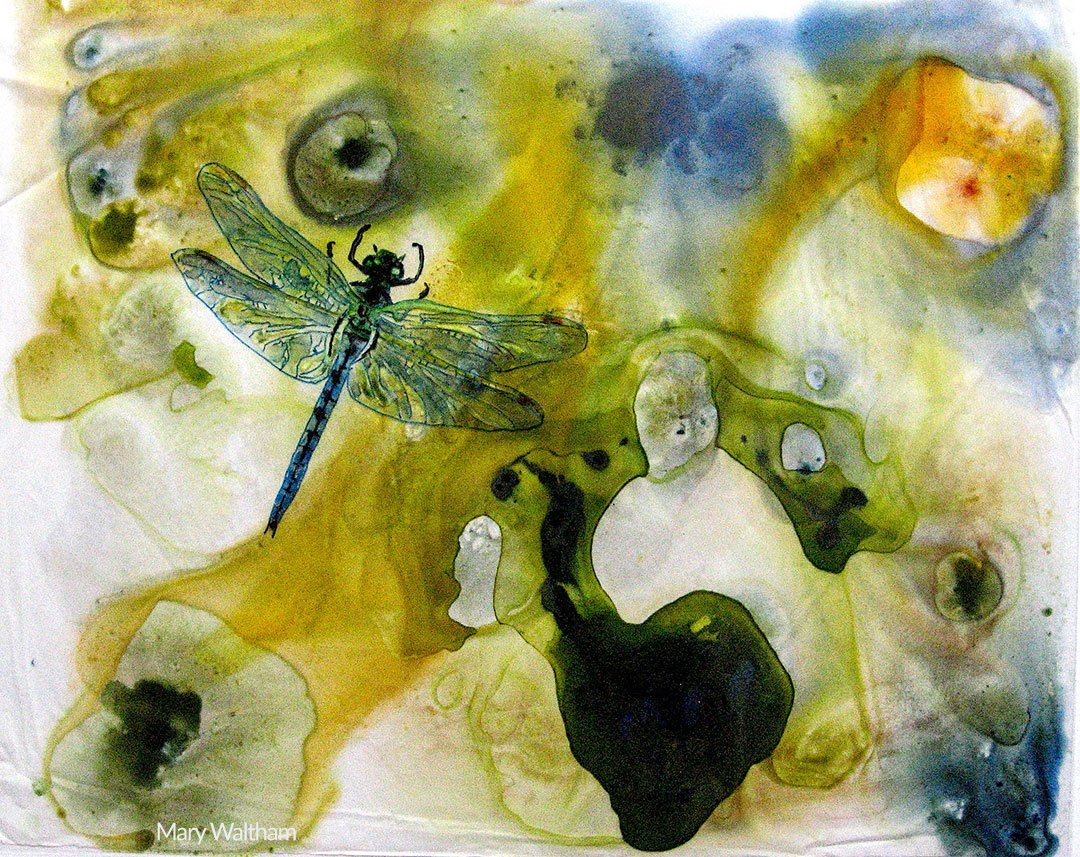 LHT Art on the Trail Mary Waltham Dragonfly