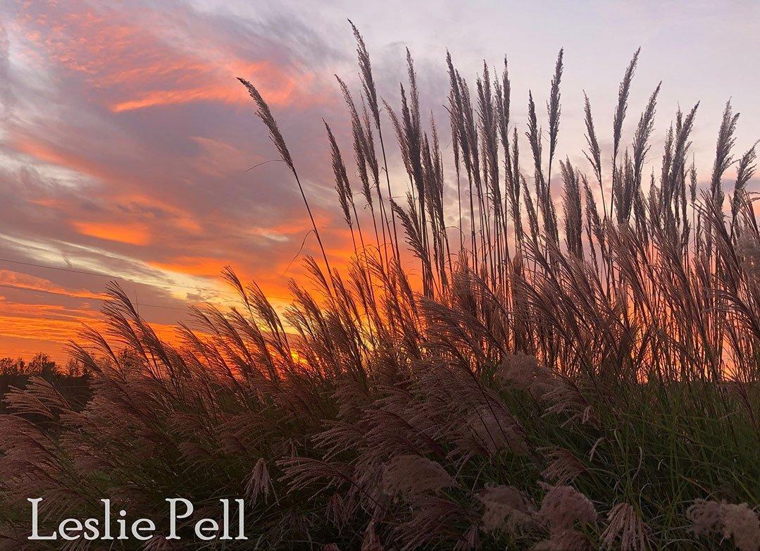 LHT Art on the Trail Leslie Pell Kerr Sunset