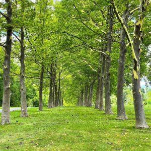 LHT Rosedale Park